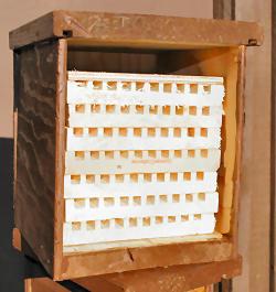 Mason Bees For Sale Buy Mason Bees Mason Bee Homes